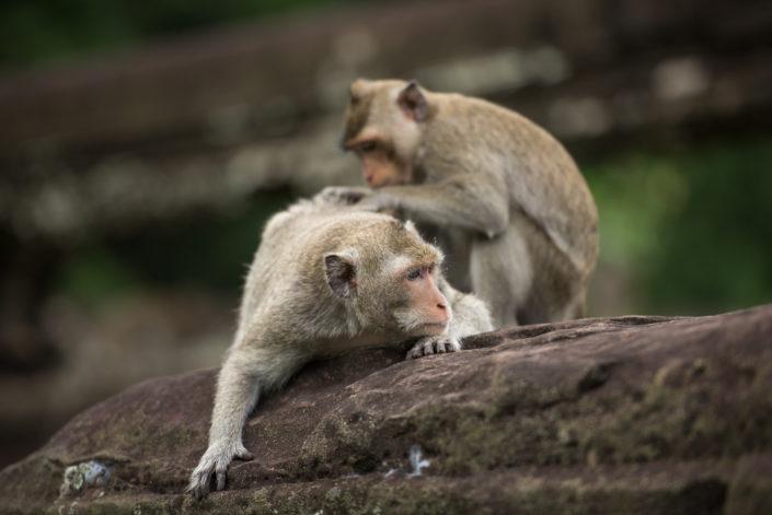 Angkor's dwellers